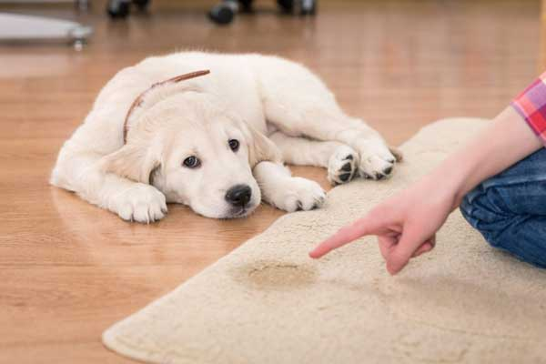 You may not realize it but the products you use to keep your house clean could be dangerous, or even toxic, for your dog. Many commercial cleaning products contain harmful chemicals that can be hazardous for your dog if he inhales or ingests them.