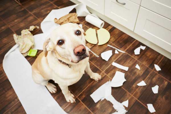 Many dog parents keep cleaning products that are not safe for dogs around the house.  Cheaper and just as effective as the products you buy at the store, we've found a few DIY cleaning supplies you already have in your pantry.